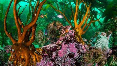 Photo of Oceana da a conocer imágenes submarinas inéditas del mar de Pisagua