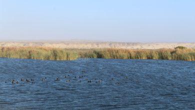 Photo of Seremi del Medio Ambiente busca proteger al Humedal de la desembocadura del río Copiapó.
