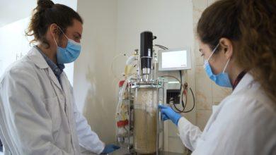 Photo of Biotecnólogos desarrollan Umami chileno, el ingrediente que busca disminuir hasta en un 40% el consumo de sal