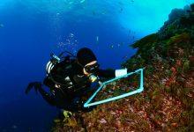 Photo of G9 invita a conocer biodiversidad, conservación y uso sustentable del mar de las islas oceánicas