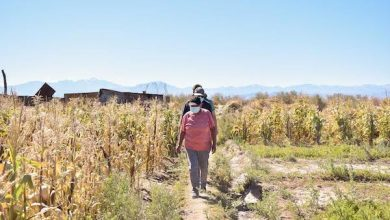Photo of Agricultores de El Loa se programan para sus próximos cultivos