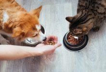 Photo of ¿Pueden las mascotas comer lo mismo que sus dueños?