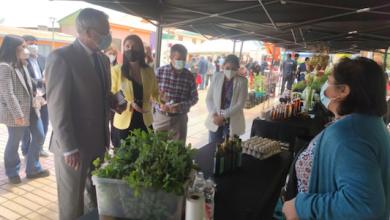Photo of Impulso a mujeres agricultoras de Taltal y el Mercado Campesino