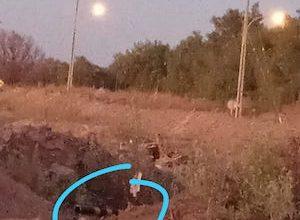 Photo of MALDITOS: Sólo un día duró cámara de seguridad en camino a Ojo de Opache